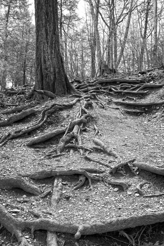 Tree-Spine-Roots