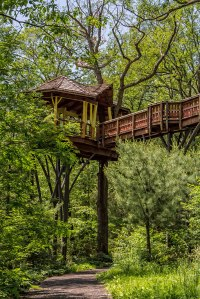 Nay-Aug-Tree-House-2