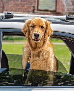 Wilkes-Barre-Dog