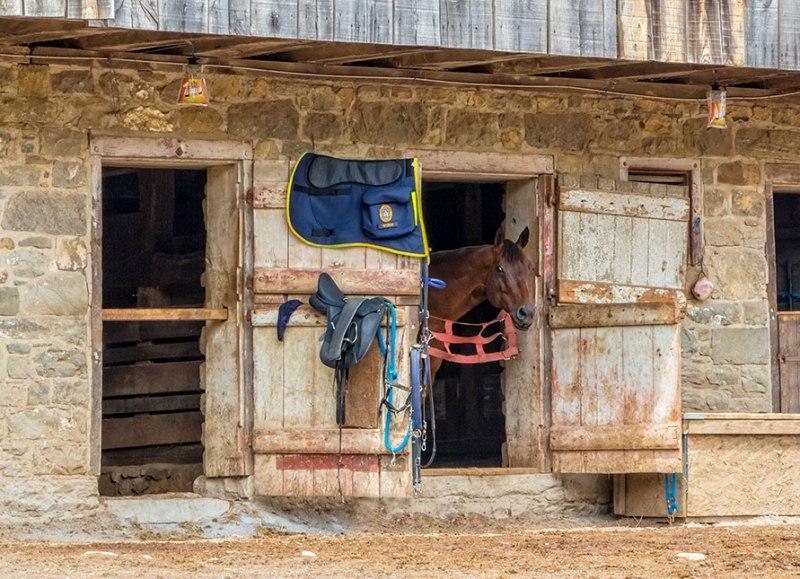 Bethlehem-Police-Horse