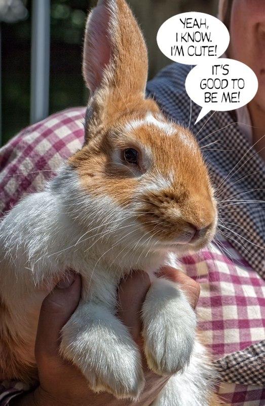 Bunny-Rabbit-1