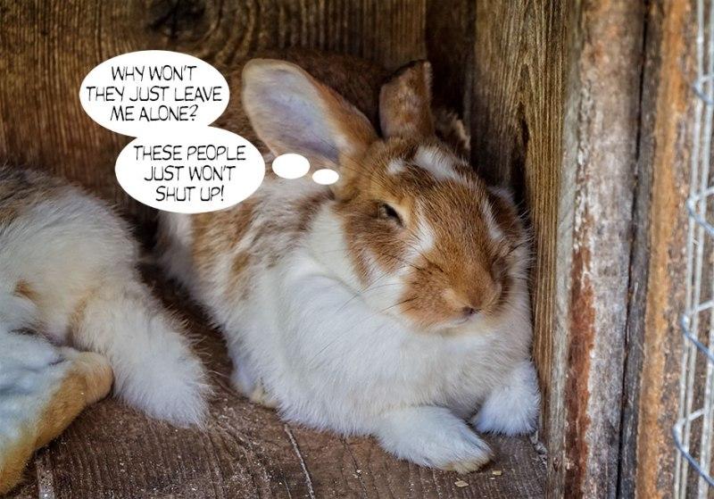 Bunny-Rabbit-2