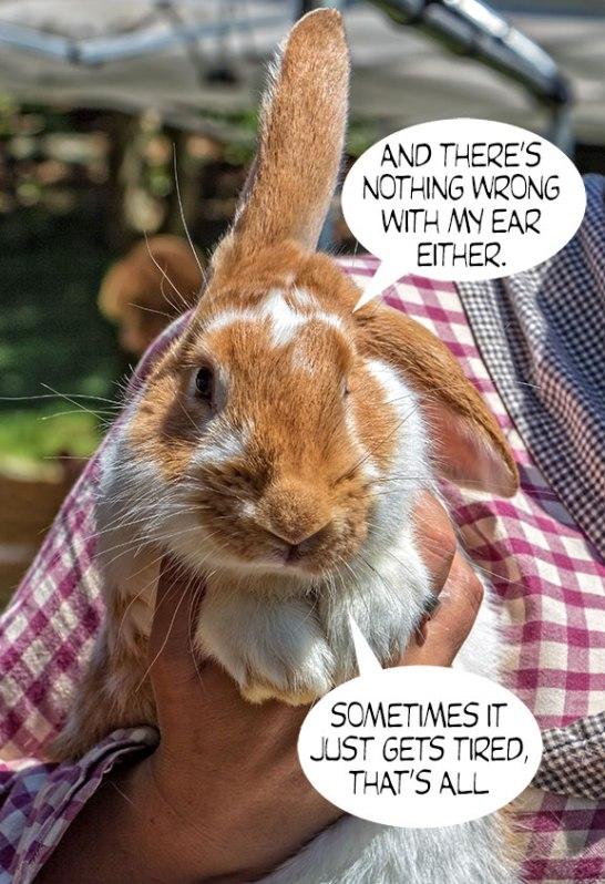 Bunny-Rabbit-3