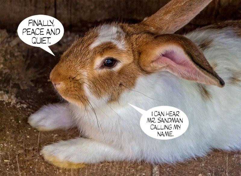 Bunny-Rabbit-4