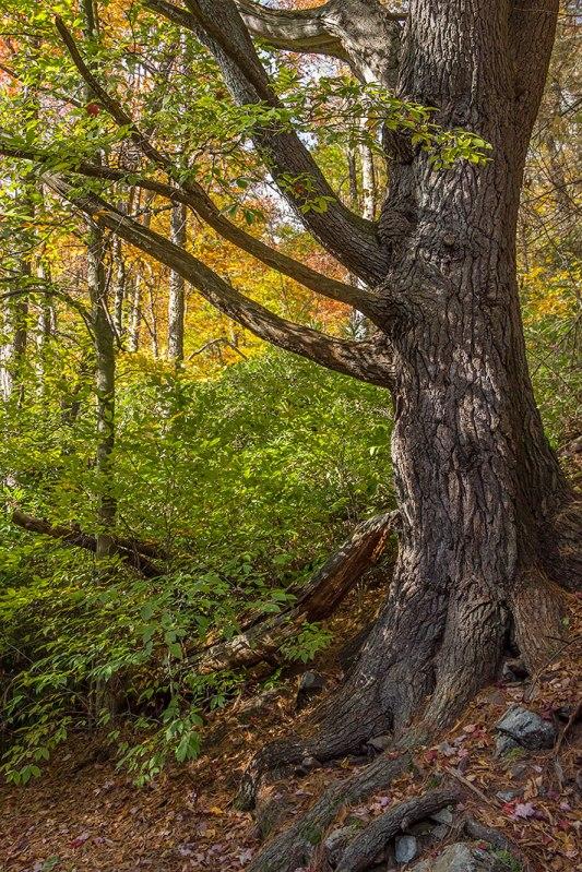 Great-Tree