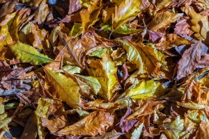 Colorful-Leaves