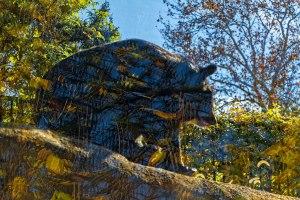 Looking-Glass-Bear