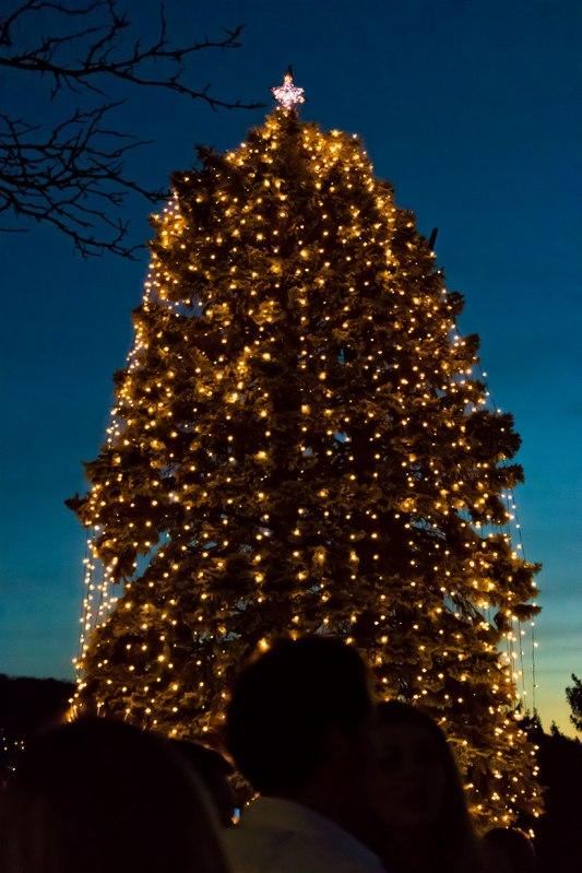 bethlehem lighting christmas trees. Bethlehem-Christmas-Tree Bethlehem Lighting Christmas Trees