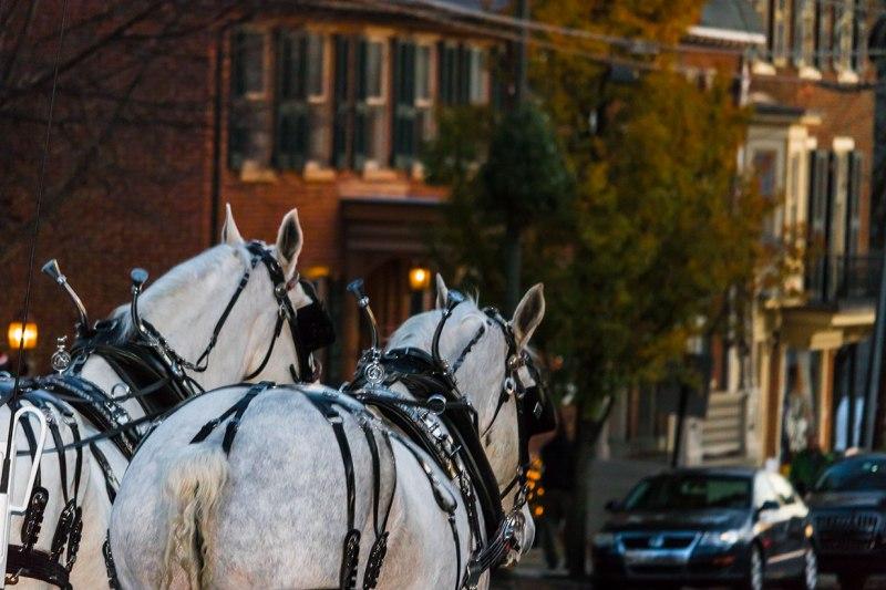 Buggy-Horses