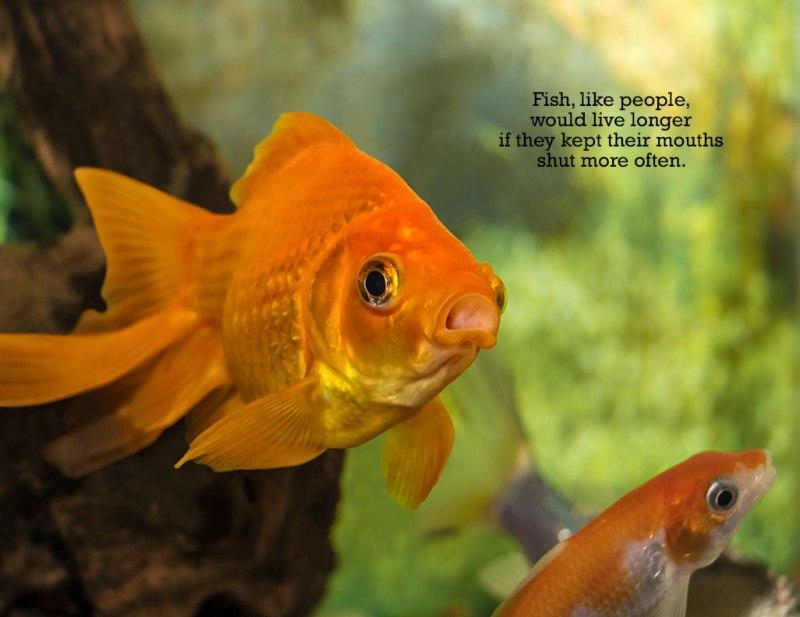 Fish-12