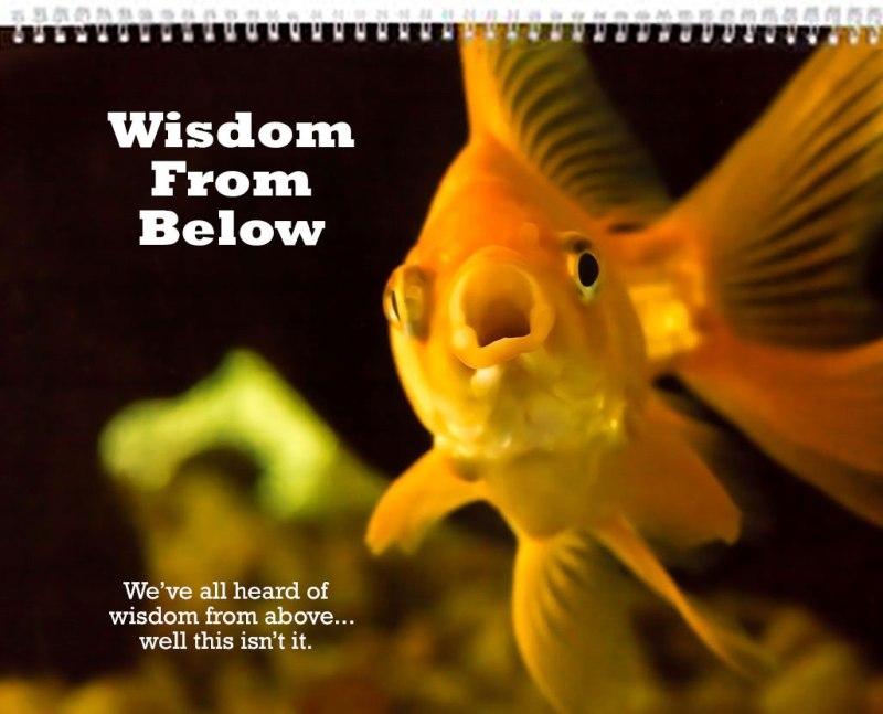 Fish-Wisdom-Cover