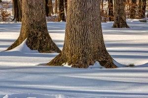 Hickory-Run-Snowfall-8