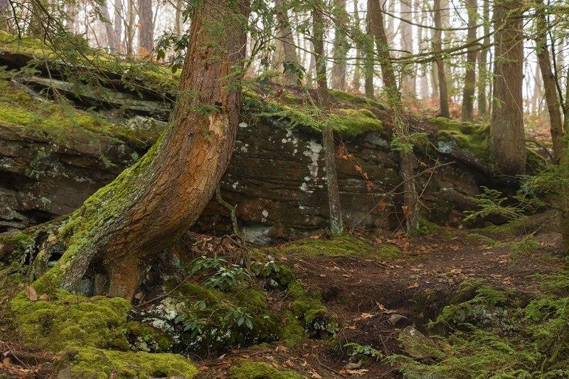Tubbs-Woods-1