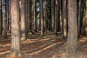 Woods-3