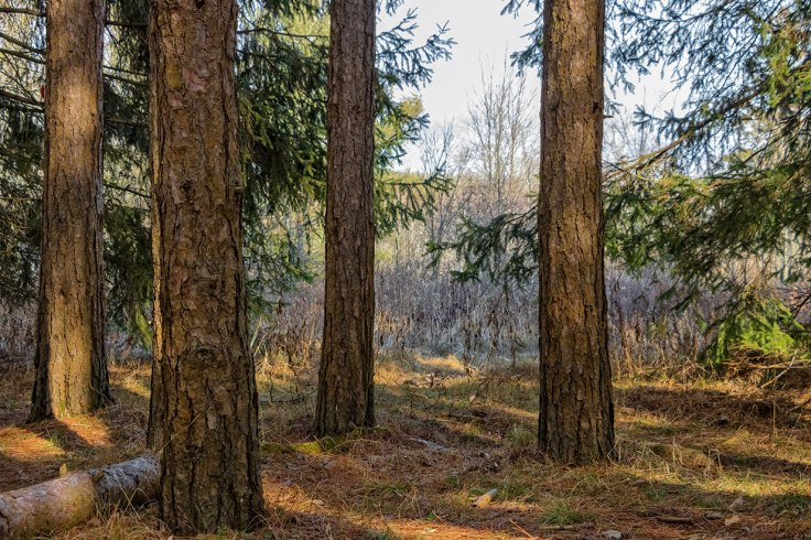 Woods-4