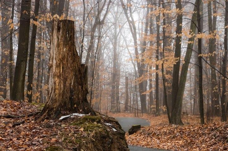 Stump-On-Path