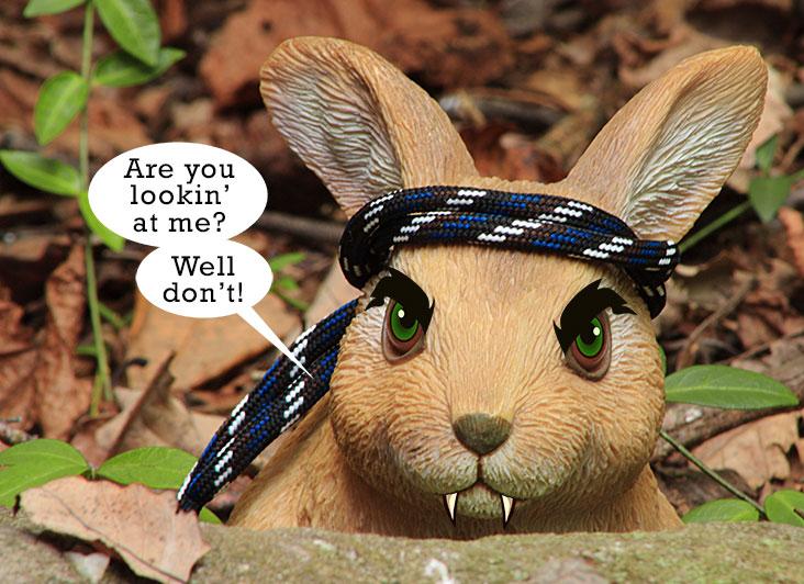 Terrorist-Rabbit