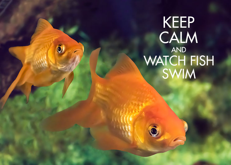 Keep-Calm-Fish-Card