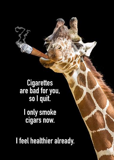 Cigar-Smoking-Giraffe