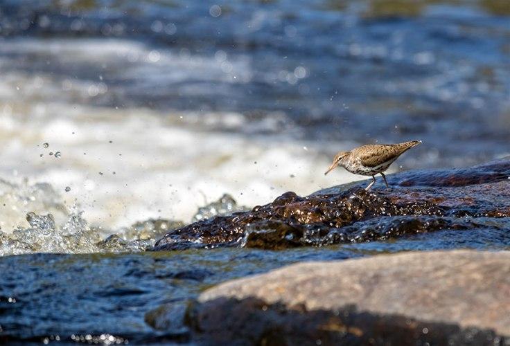 Fishing-Bird-1