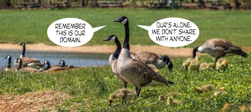 Geese-Poop-1