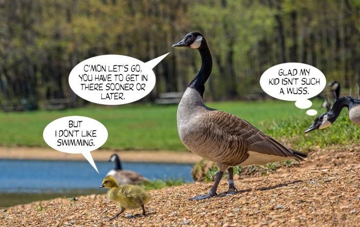 Geese-Poop-5