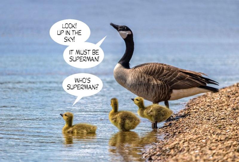 Geese-Poop-7