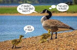 Geese-Poop-9