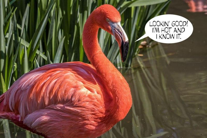 Hot-Flamingo 1