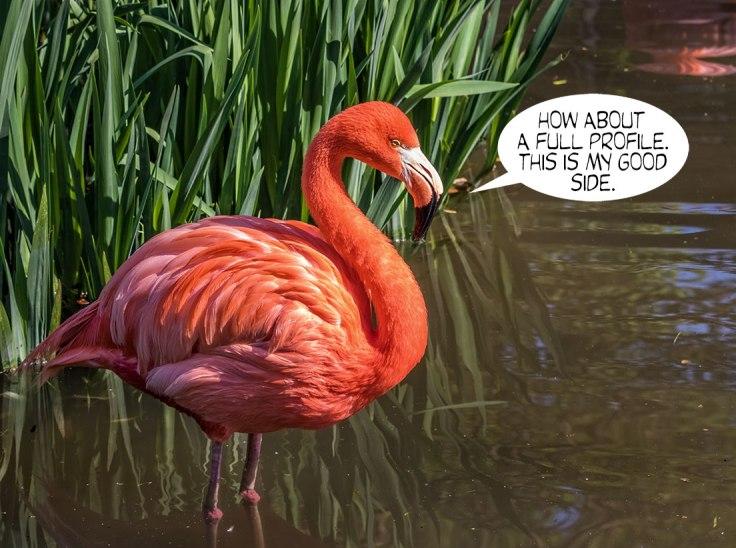 Hot-Flamingo-2