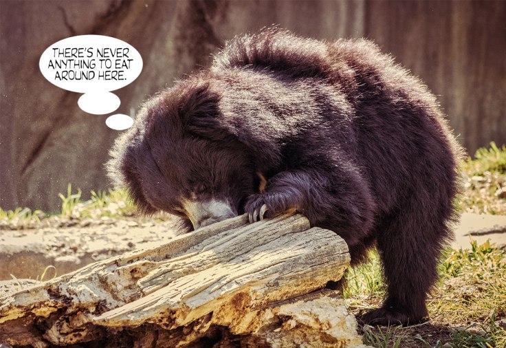 Hungry-Bear