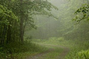 Woods-In-The-Fog-2