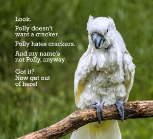Annoyed-Cockatoo