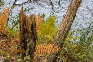 fall-leaves-7