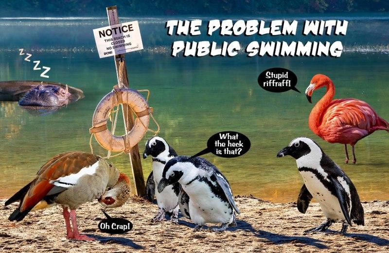 public-swimming-2