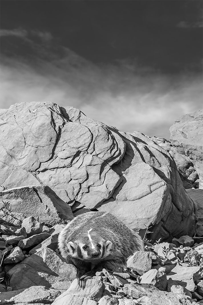 rock-rodents