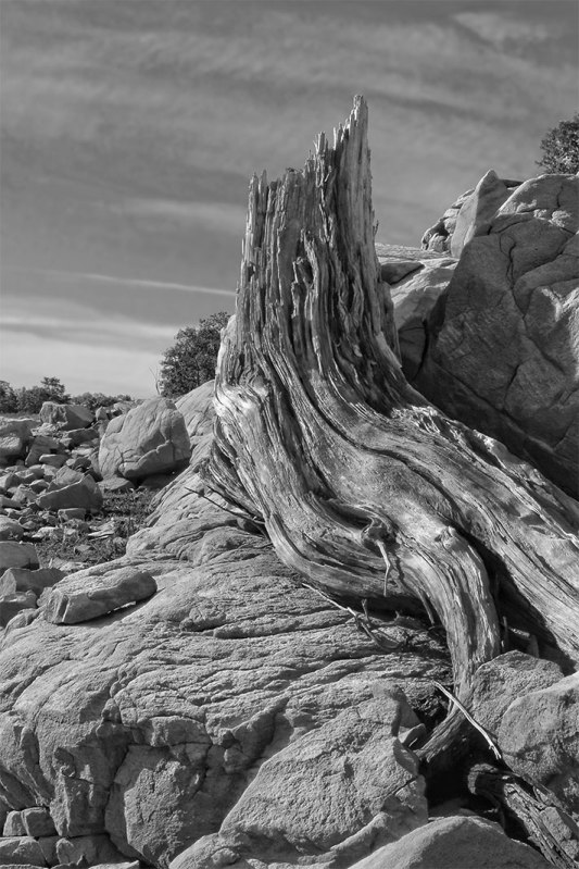 tree-stump-black-white