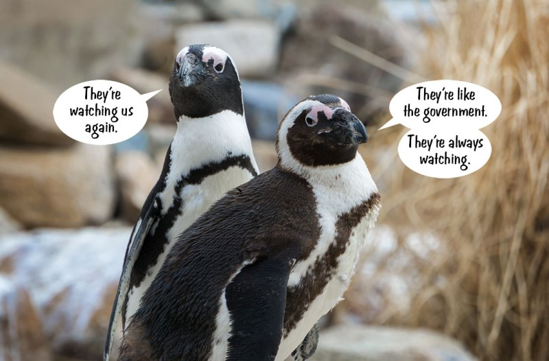 Penguins-Watching-You