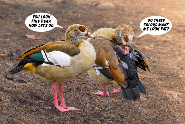 Fat-Ducks