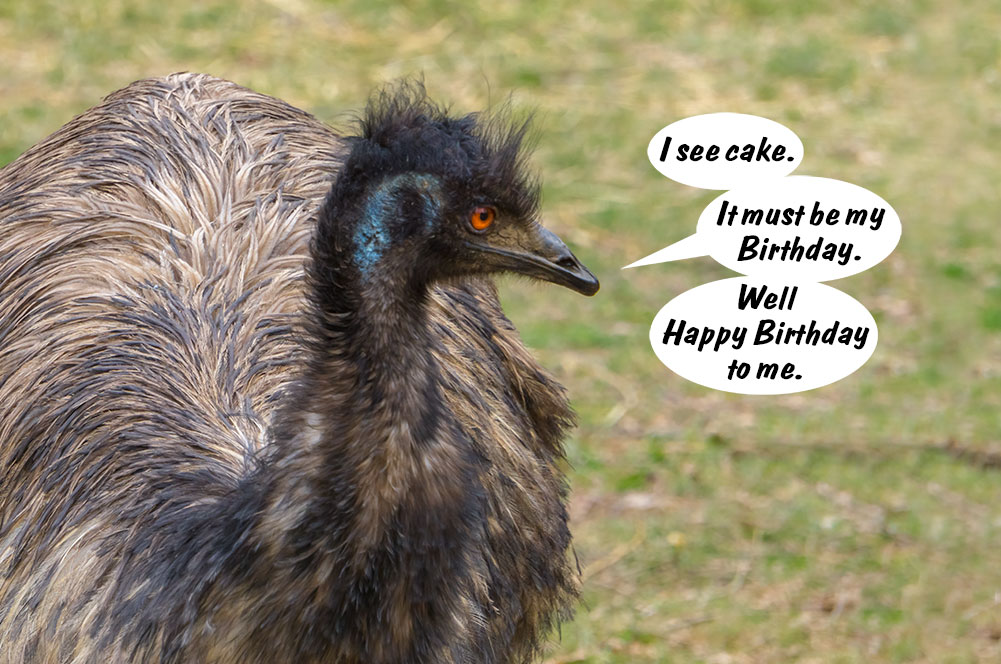 Ostrich-Birthday