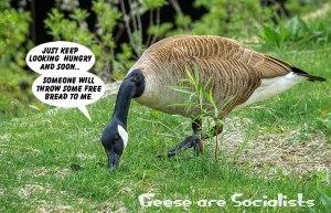 Socialist-Goose