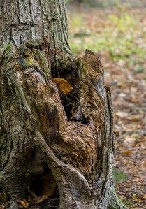 Tree-Stumps-4