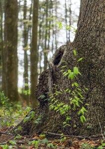 Tree-Stumps-5