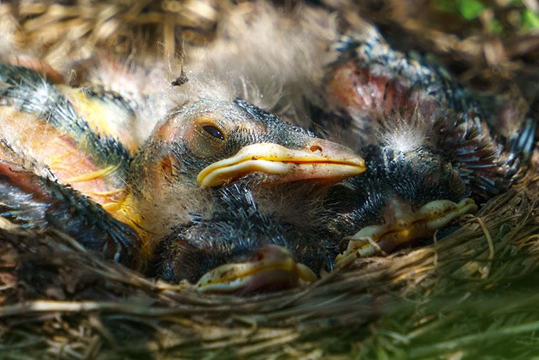 Baby-Birds-5