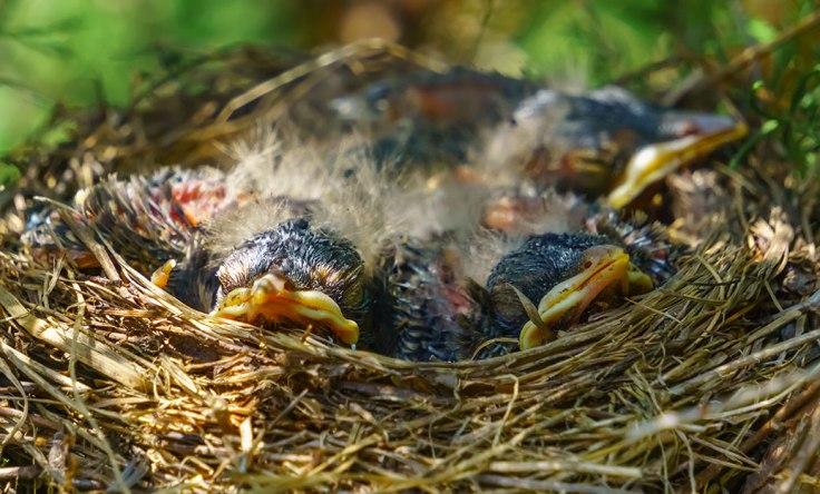 Baby-Birds-6