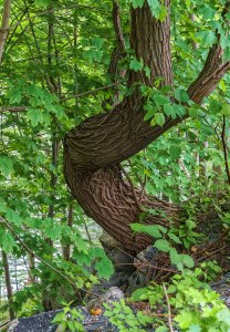 Tree-On-Lehigh-River-1