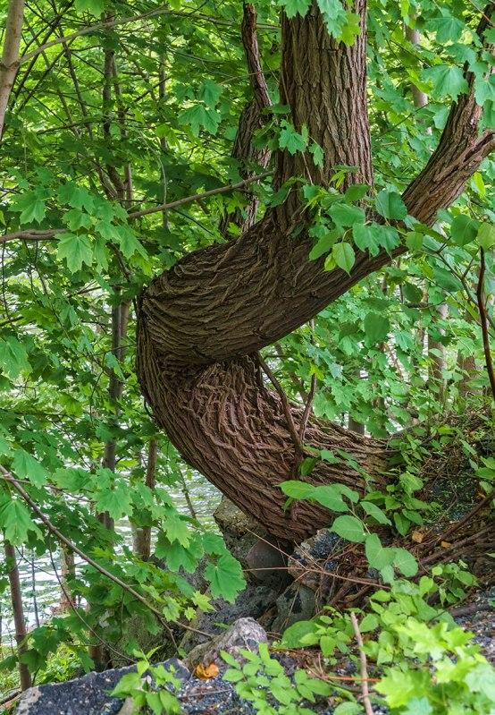 Tree-On-Lehigh-River-1