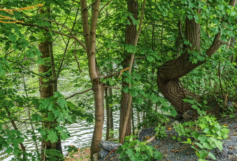 Trees-on-Lehigh-River