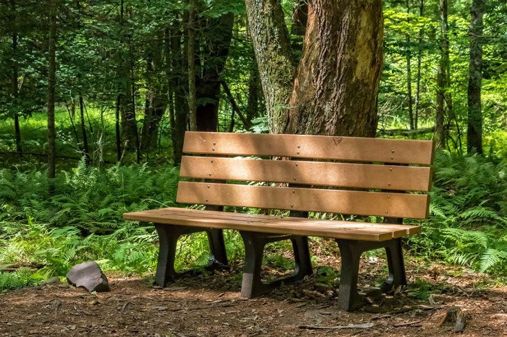 Bench-In-The-Woods