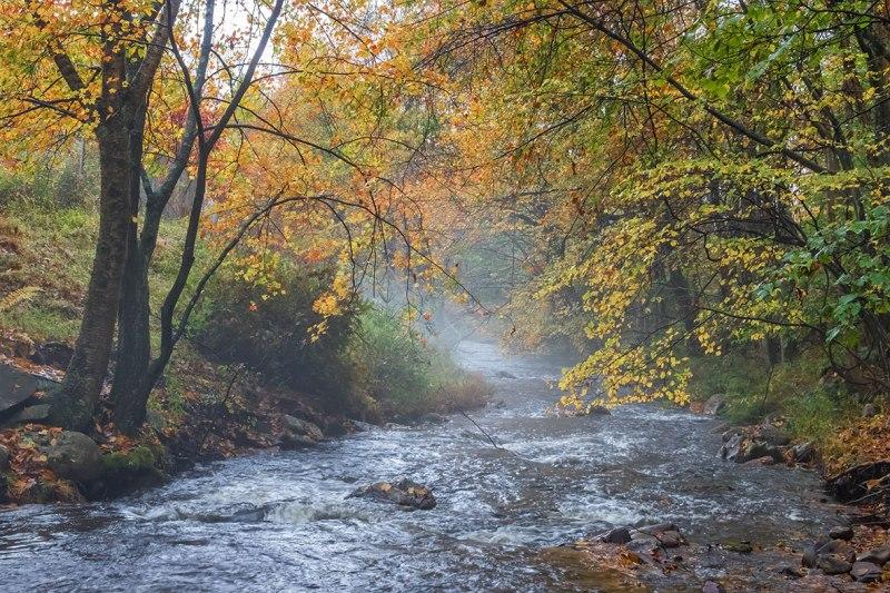 Fall-In-Hickory-Run-2